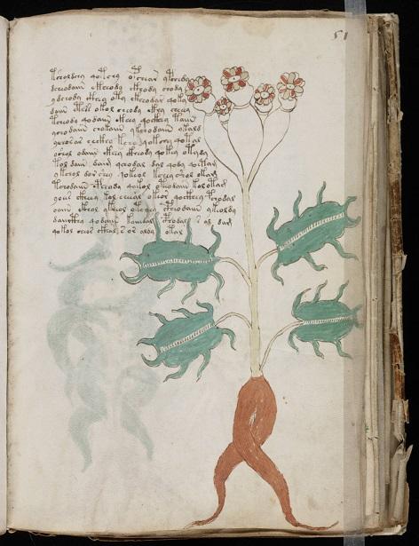 Voynich_Manuscript_(101)